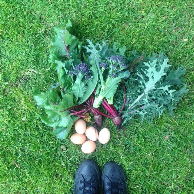 Another food shot.. via my #mybackyardfarm instagram tag.