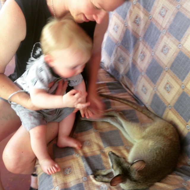 Oscar meeting a joey.
